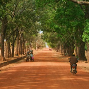 2009-01-18 Burkina Faso, Tree lined road to Nazinga elephant preserve