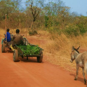 2009-01-18 Burkina Faso, road to Nazinga, cart carrying fodder for animals