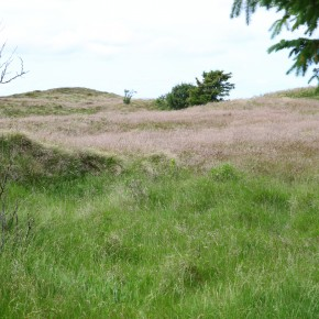 2011-06-11 Germany Sylt Morsum Cliff burial mounds