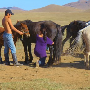 2011-09-22 Mongolia Ulan Bator - Mongolian herdsman holds the colt near the mother while she is being milked so that she will not get nervous.