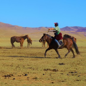 2011-09-22 Mongolia Ulan Bator - the herder uses a rope looped at the end of along pole to capture his horses.