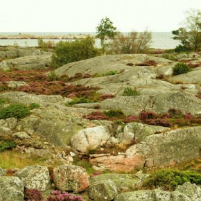 2008-08-23 Sweden, Bullerö  - and island nature preserve in the Swedish Archipelago, nature preserve