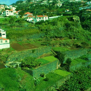 2009-01-14 Madeira, Outside of Funchal Madeira agricultural terraces