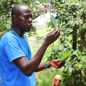 2011-04-08 Togo, Kloto Forest - Patricio, our guide explained the use of various medicinal plants in the countryside when we took a walk into the hills
