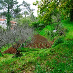 Every little piece of flat land in Maderia is cultivated