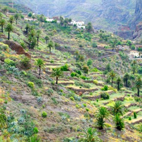 Gran Canaria  Teno Mountains Masca Village Agricultural terraces
